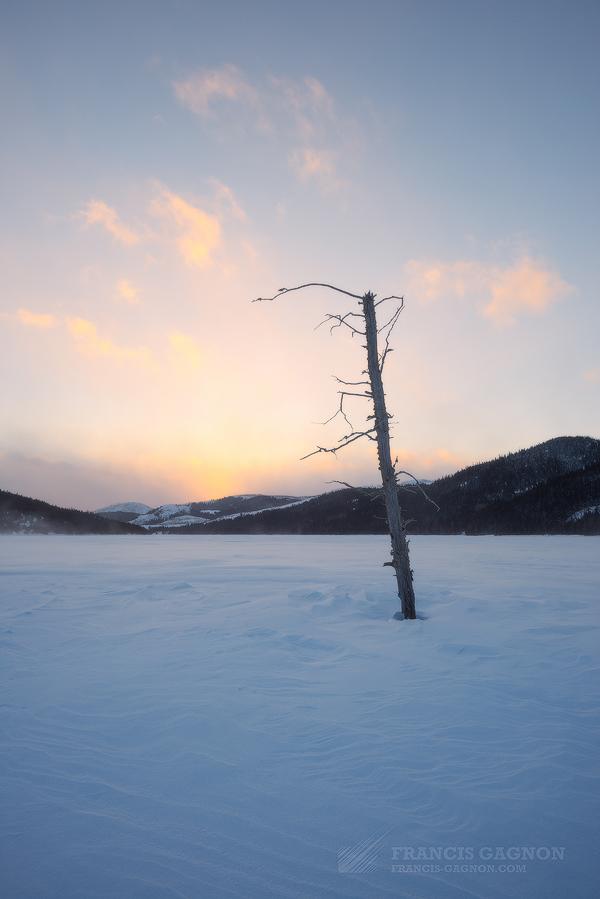 Un arbre ravagé par les pic-bois captant les dernières couleurs du jour.