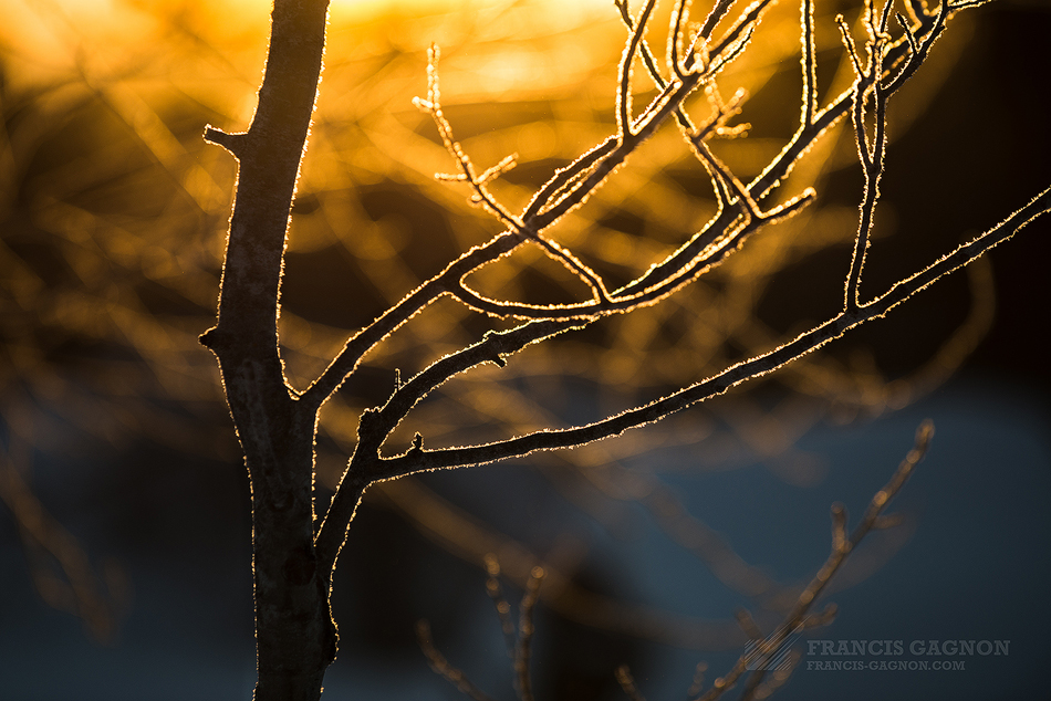 La lumière chaude et dorée du matin passant à travers la fine couche de givre recouvrant les branches des arbres.