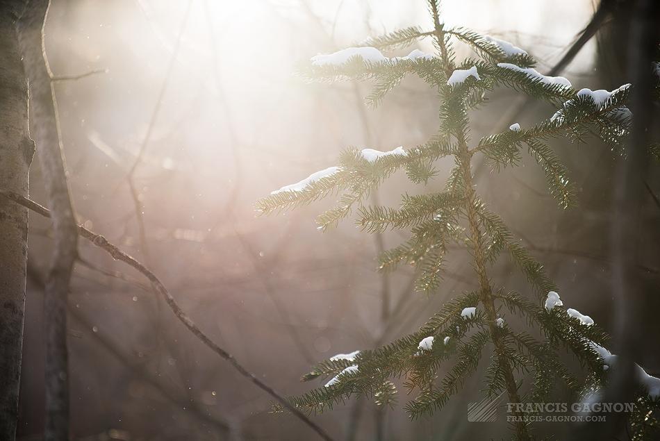 Une fine neige tombant à travers le soleil de fin de journée.
