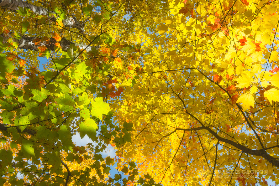 charlevoix, foliage, québec, canada, automne, autumn, fall