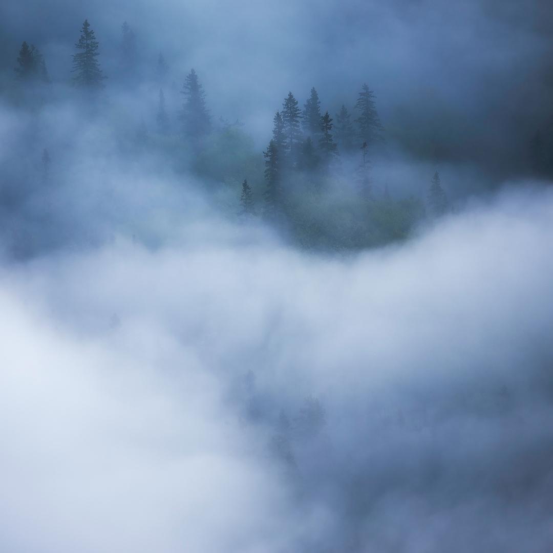parc, national, forillon, forêt, canada, landscape, paysage, brume, mist, fog, photo, landscape