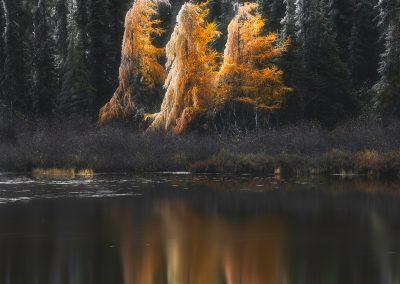 Les fantômes d'automne I