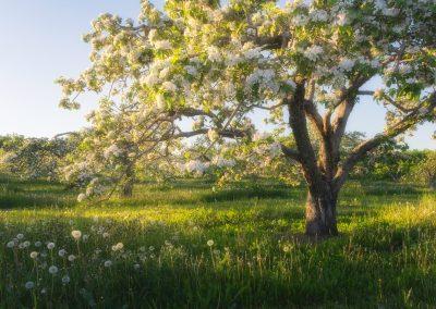 Les saisons de Charlevoix : Le printemps et l'été