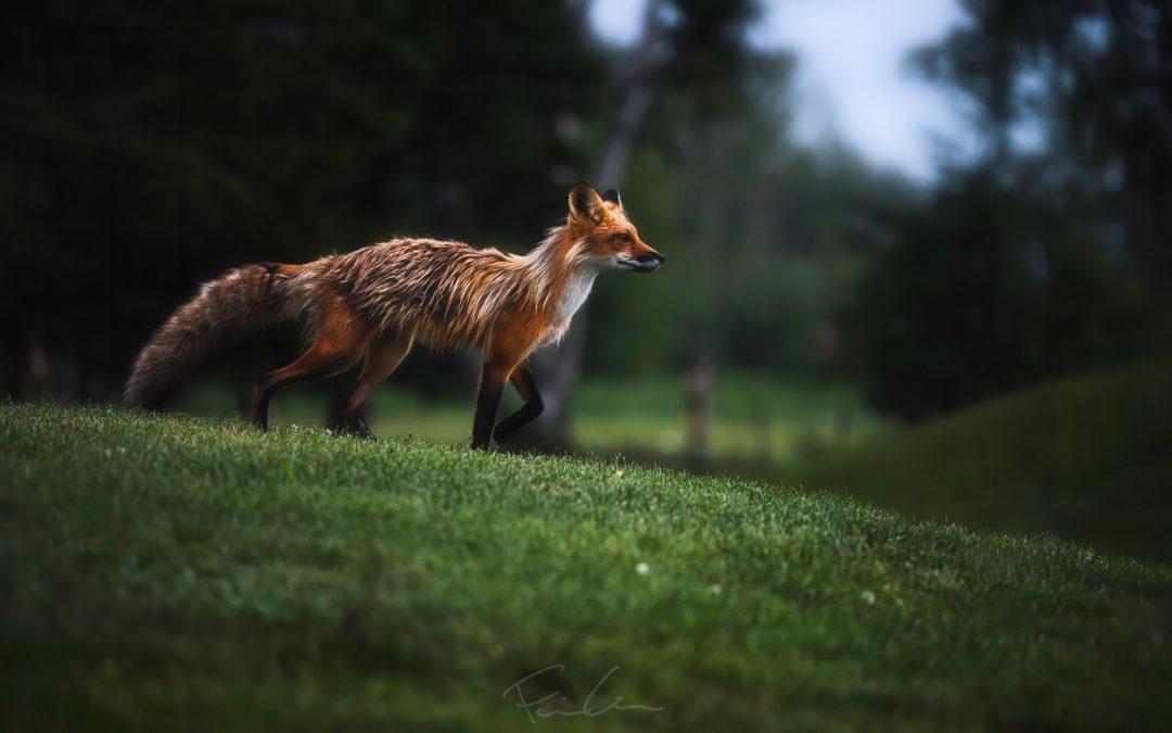 Six mois de photo animalière : quelques constats concernant la composition