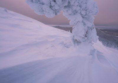 hiver, arbre, fantôme