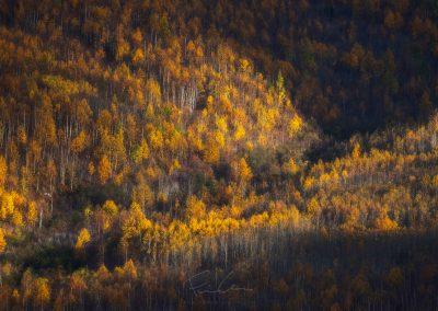 parc national des grands-jardins, montagne, automne