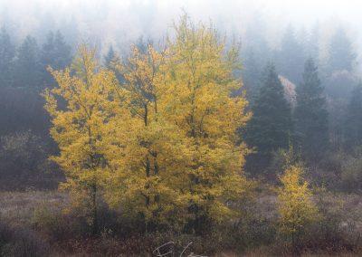 automne, charlevoix, arbre, paysage